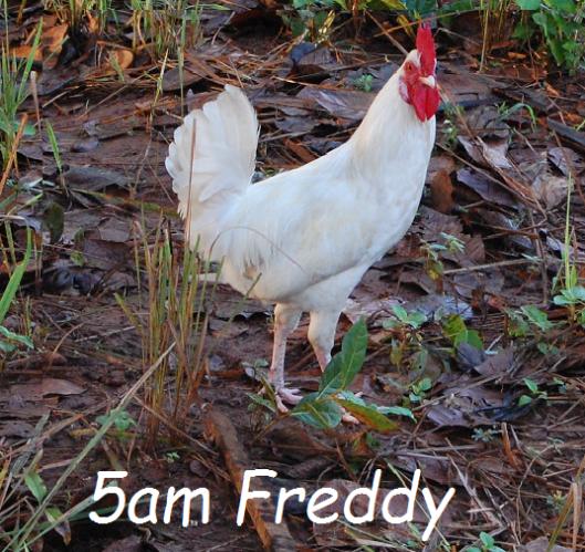 5am Freddy